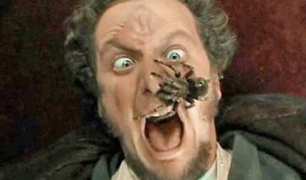 spiderface