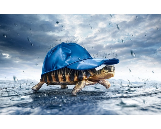 turtle_with_cap_in_the_rain-1280x1024