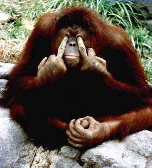 1Funny-Monkey-Giving-Fingers-Picture-FunFry_com[1]