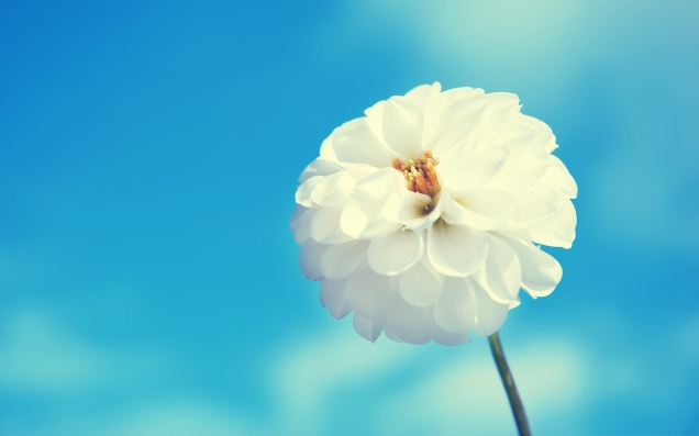 7031301-white-flower